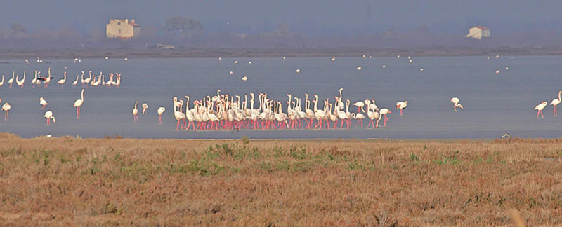 Flamingos © David Wilson