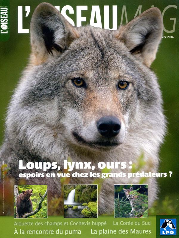 Oiseau Magazine issue 125 (click for larger image)