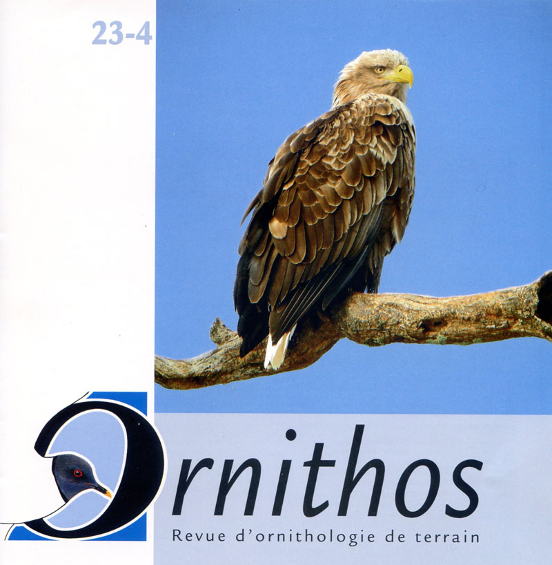 Ornithos 23-4 cover, with image of White-tailed Eagle (click for larger image)