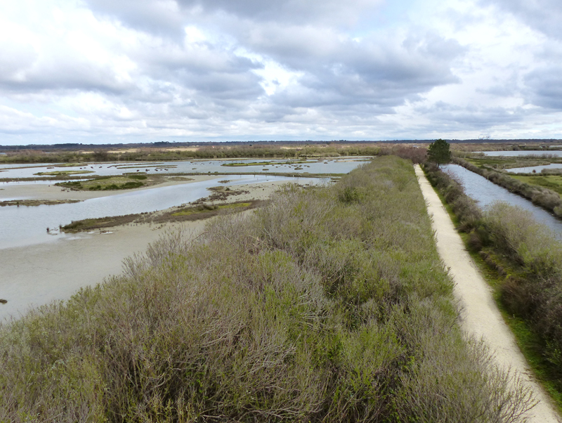 Looking back into the reserve from tower hide © Ken Hall (click for larger image)