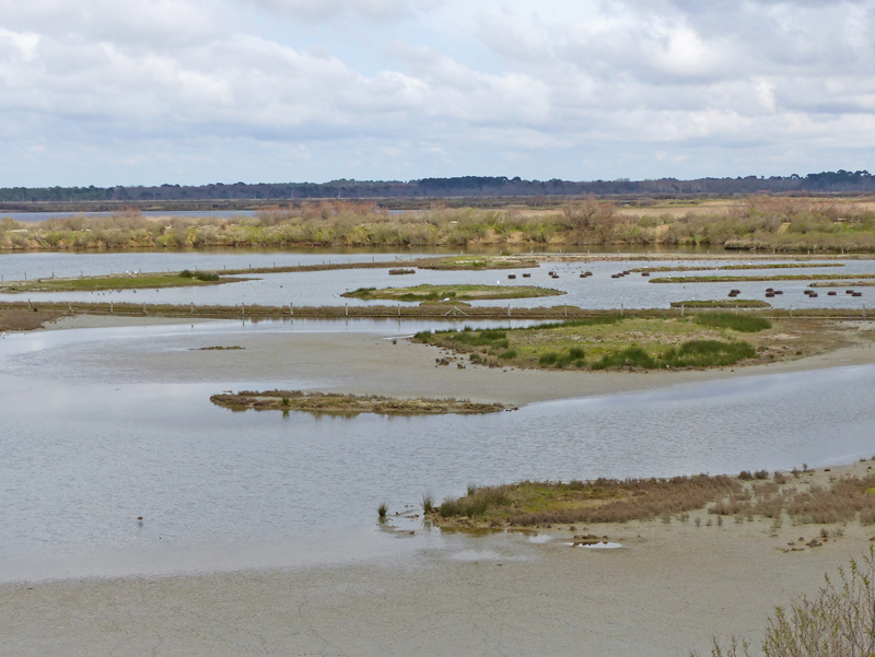 One of the lagoons where Black-winged Stilts nest © Ken Hall (click for larger image)